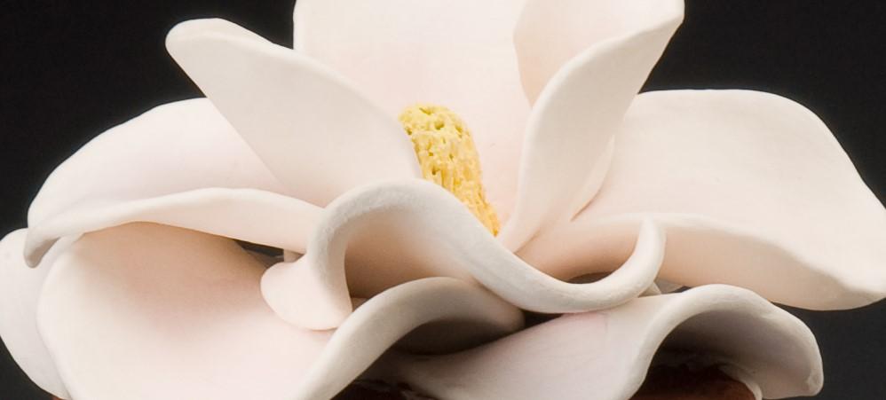 Magnolia detail